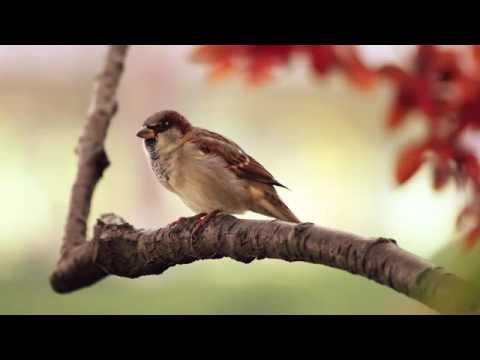 Pachelbel's Canon In D   Relaxing Harp Music   Beautiful Classical Music ★19