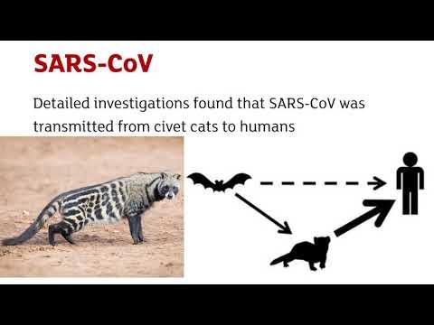 A Short Presentation On 2019-nCOV (Novel Coronavirus 2019)