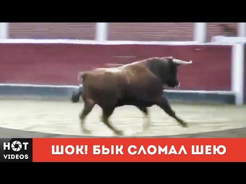 Бык сломал себе шею. Все в шоке!!! ( HOT VIDEOS | Смотреть видео HD )