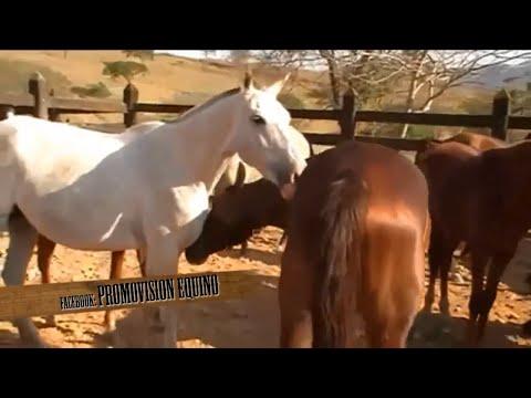 Equino: Anemia Infecciosa Equina
