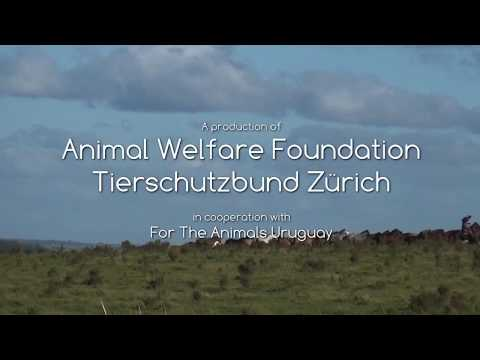 "Report ""The blood business"" of Animal Welfare Foundation and Tierschutzbund Zürich"