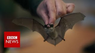Would you give bats a home in your fridge? - BBC News