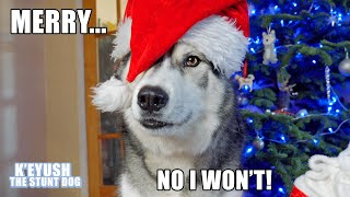 husky-actually-say-merry-christmas-and-argues-about-it