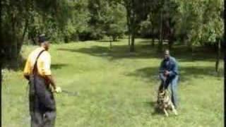 Pittsburghk9 German Shepherd Dutchess' Personal Protection