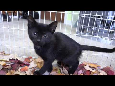 Kittens Play in Fall Leaves for the First Time