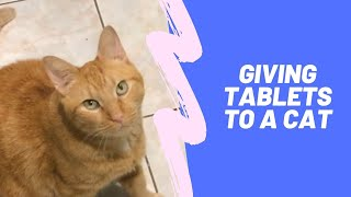 How to give a tablet to a cat