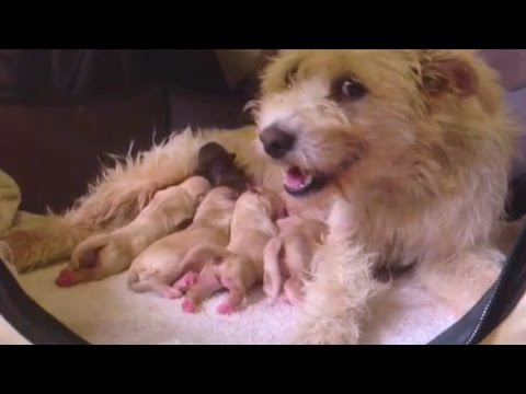 Thumbnail: Stray Dog Gets Rescued And Has The Cutest Puppies