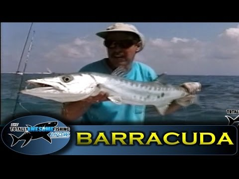 Barracuda fishing - Totally Awesome Fishing
