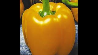 Как сажать болгарский перец на рассаду? Видео Екатерины Хлебниковой(как посадить рассаду перца, какой сорт перца выбрать, как пикировать и удобрять рассаду, секреты и хитрости..., 2015-02-24T00:05:18.000Z)