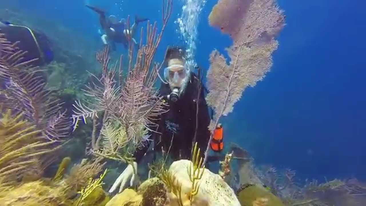 Aquarius scuba in jardines de la reina cuba youtube for Letras gijon jardines de la reina