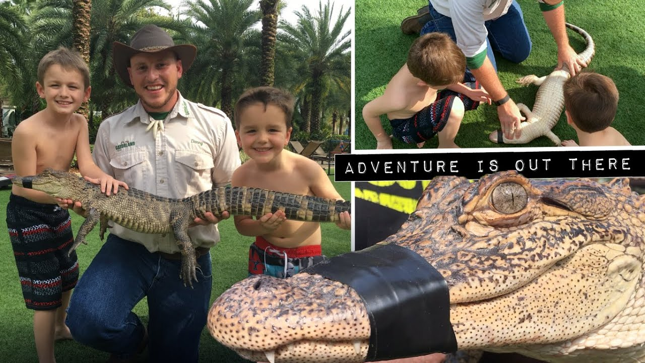 10 Alligators Facts for kids from Gatorland - YouTube