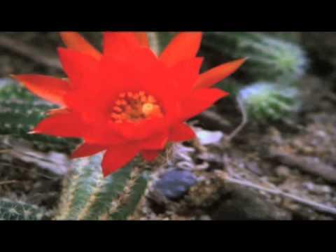 horndals blommor trädgård