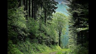Звуки природы. Шум леса, дождь, пение птиц для сна, медитации и снятия стресса. Relax 6 часов.