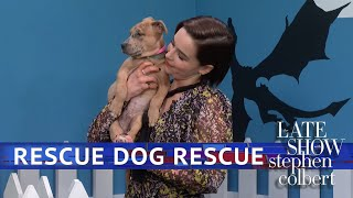Rescue Dog Rescue: Game Of Thrones Edition With Emilia Clarke