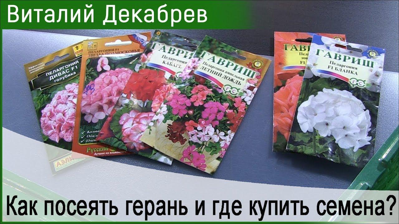 Как правильно выращивать герань-пеларгонию из семян.Уход и .
