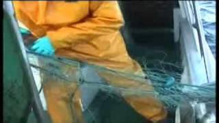 levantando el aparejo a la lubina cedeira lifting the bass rig cedeira