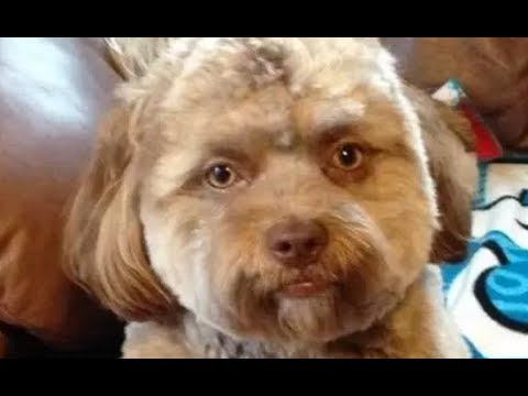 The Daily Rabbit Hole #123 | Andrew McCabe FIRED | #BeingJulianAssange | Human-like dog