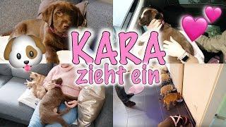 Unser Welpe zieht ein 🐶🎀💕 | Labrador Kara | 1. Autofahrt & das Zusammentreffen