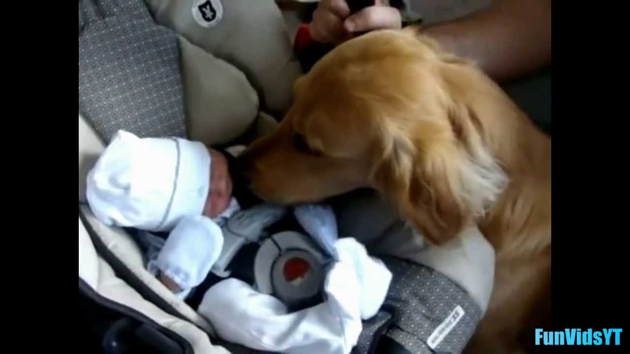 Dogs Meeting Babies For First Time Compilation 2014 New Hd