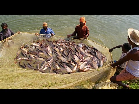 Big fish catching in india village youtube for Youtube fishing videos big fish