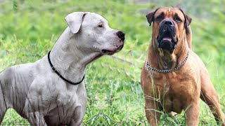 Top 10 Superpower Dogs with Impossible Power | Dogmal