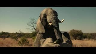 сцена со слонами.. Братья из гримсби