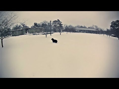The Adventures of Rasta Bowwow - Episode 2287 - 12 16 2019 from YouTube · Duration:  4 minutes 19 seconds