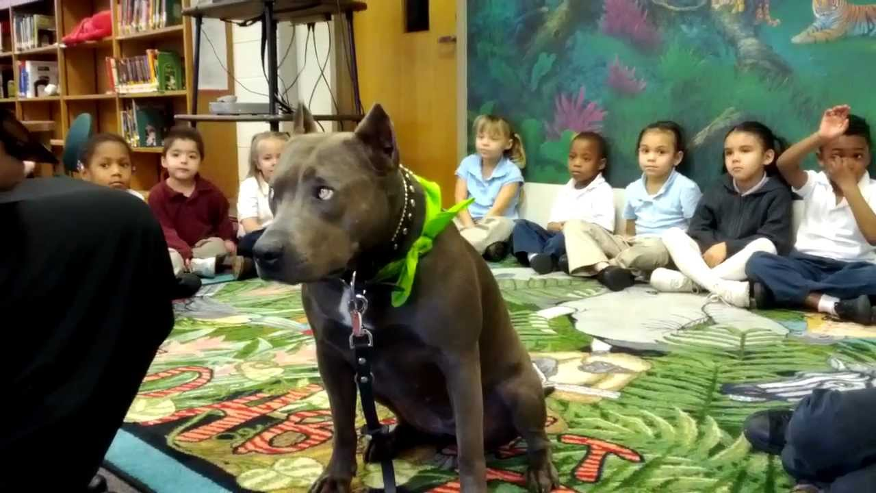 Quot Tail Wagging Tales Quot Therapy Dog Reading Program With Elle