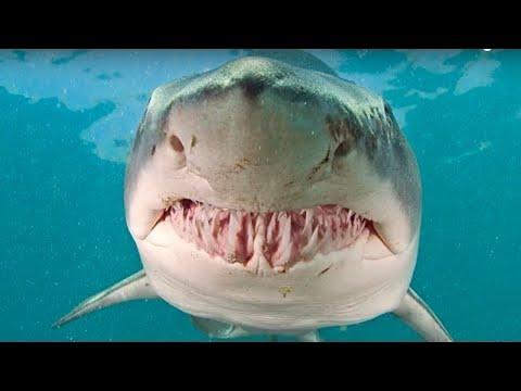 Top 5 Deadliest Sharks