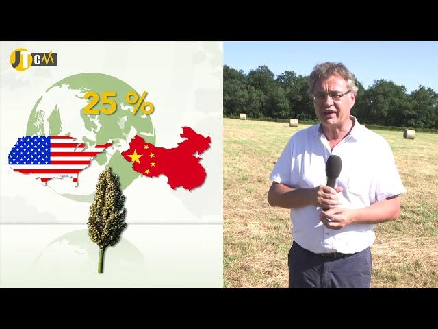 Les prix du blé ballotés par les USA et la Mer Noire !