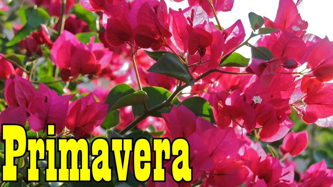 Mondini plantas como cultivar primavera youtube - Plantas de temporada primavera ...