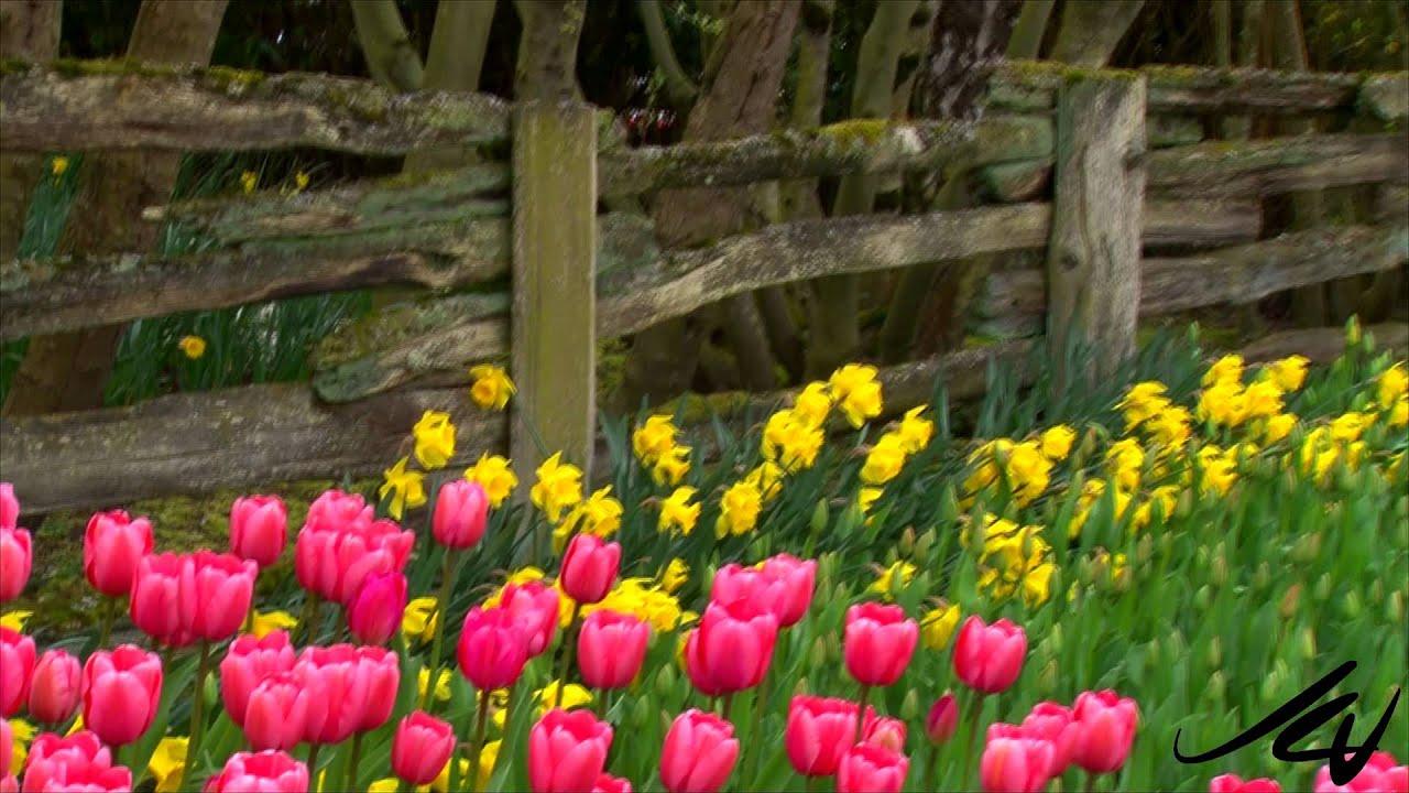 April 1 - 30, - 2015 Skagit Valley Tulip Festival Preview ...