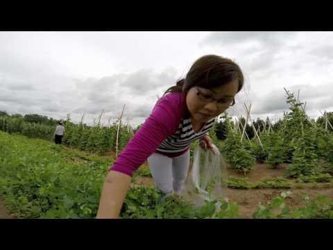 Hmong YouTube Wis Channel  Ua TebTaum Pobkws Dib Taub thumbnail