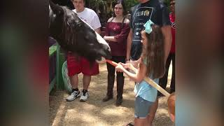 Top 10 FUNNY HORSE TROLLING BABIES AND KIDS | Funny Babies and Pets