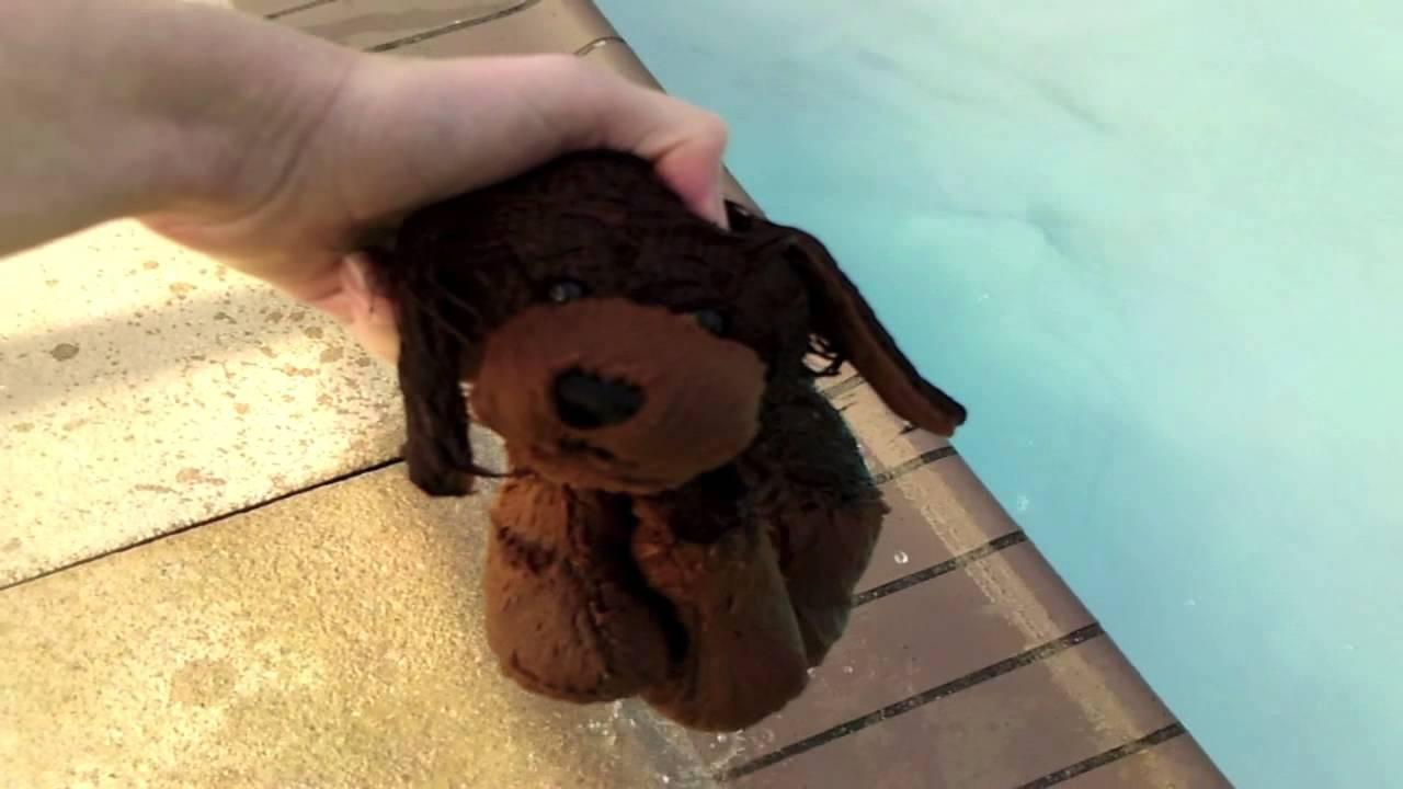 Swimming In The Pool In San Fransisco Feat Agwebkinz221 Youtube
