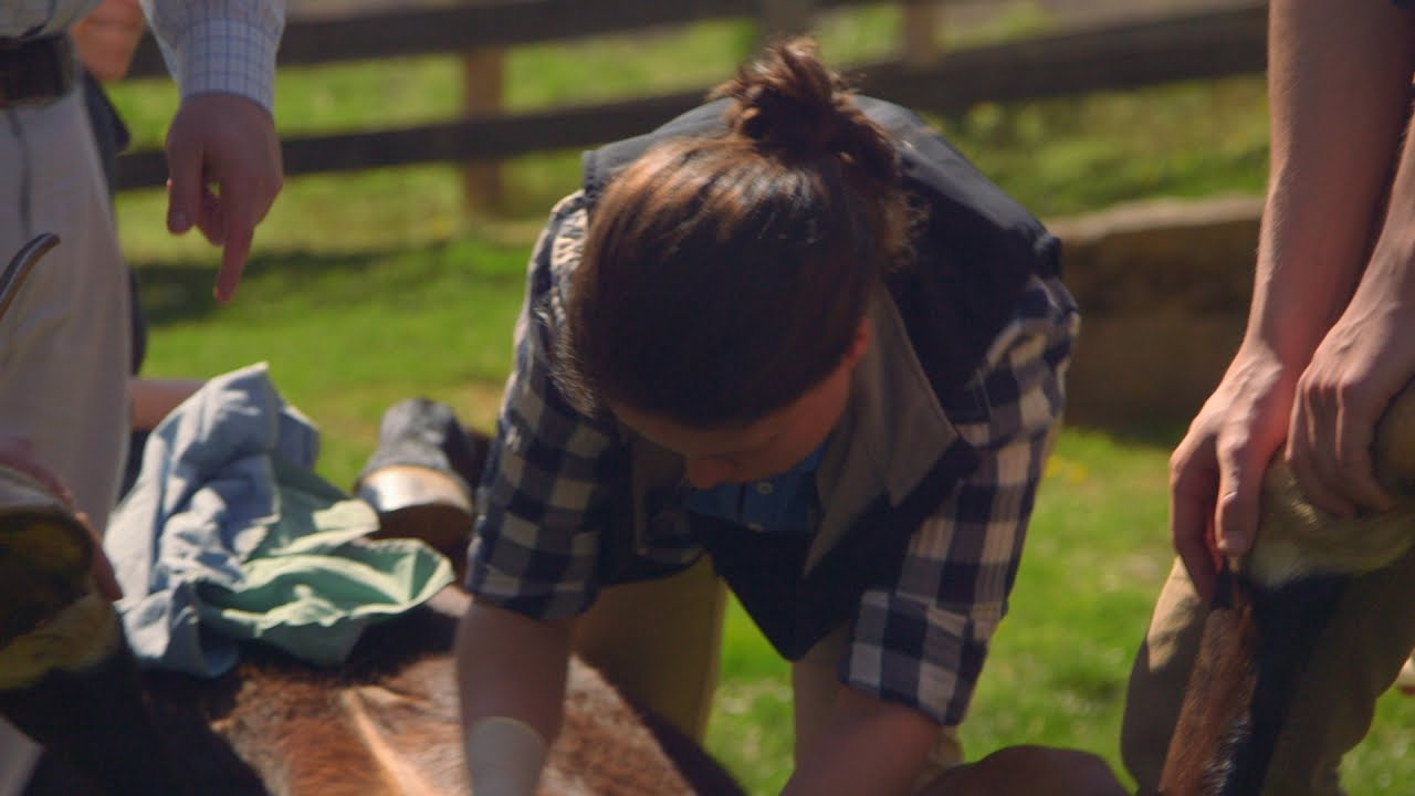 Castrating A Horse For The First Time Youtube