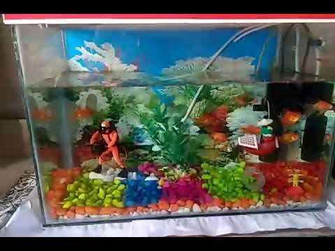 Aquarium decorations, color stone, Small fish tank decorations home changes, what's up status,