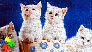 КОТЯТА. Как собрать пазл 500 элементов Castorland Puzzle 500