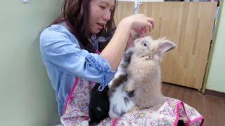 Bunnies Swarm Girl's Lap At Japan's Rabbit Cafe!