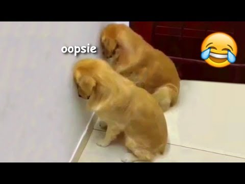 Funny guilty doggos