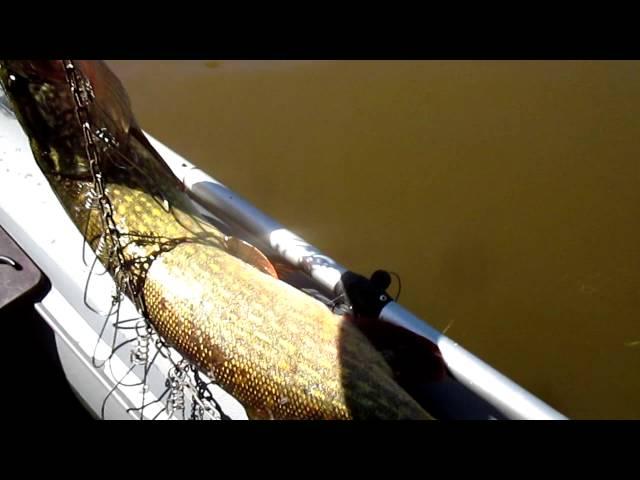 Днепровская щука на 4780 на китайский воблер Wlure C549