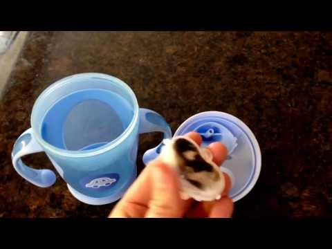 Parents Beware! Bacteria Buildup On Inside Of Sippy Cup!