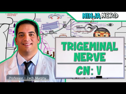 Trigeminal Nerve Anatomy - Cranial Nerve 5 Course and Distribution.