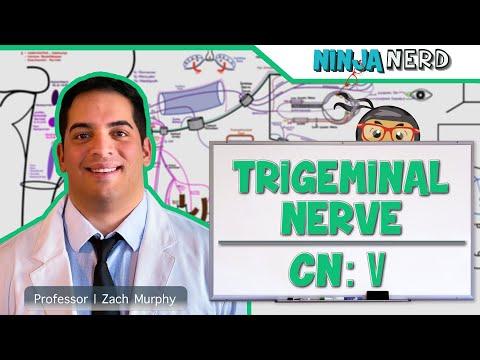 Neurology | Trigeminal Nerve | Cranial Nerve V
