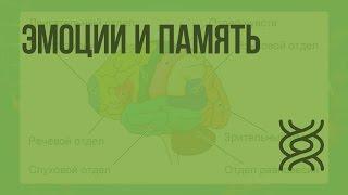 Особенности высшей нервной деятельности человека. Эмоции и память