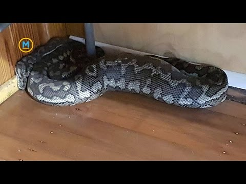 A snake fell through the ceiling in this Australian gym | Your Morning