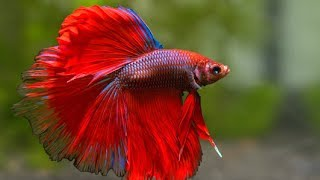 Most Beautiful Fishes From Around The World