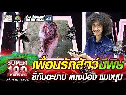 โจโฉ เพื่อนรักสัตว์มีพิษ ซี้กับตะขาบ แมงป่อง แมงมุม | SUPER 100