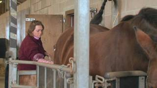 Equine Reproduction UK - 3 day breeding ...