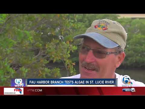 FAU Harbour Branch tests algae in St. Lucie River